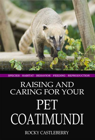 Raising Pet Coatimundis