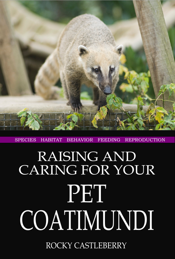 Raising Your Pet Coatimundi
