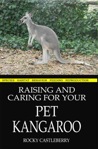 Raising A Pet Red Kangaroo